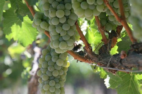 Pārbaudītas vērtības vīna plauktos: kā izvēlēties izcilu ...