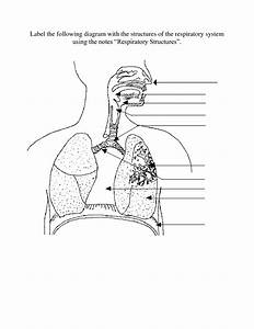 Worksheet  Respiratory System Labeling Worksheet  Grass Fedjp Worksheet Study Site