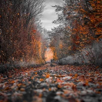 Autumn Foliage Trees Colors Ipad Parallax