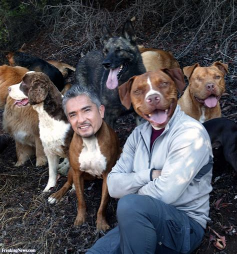 dog whisperer pictures posters news