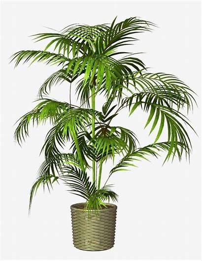 Plant Potted Clipart Pot Transparent Background Plants