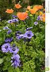 Spring Garden Flowers Royalty Free Stock Photos - Image purple and orange flower garden