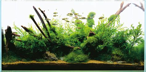 Amano Aquascape by Nature Aquarium And Aquascaping Aquascaping Wiki Aquasabi