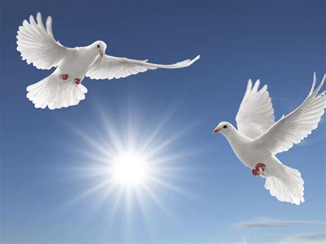 white doves sun rays tsoncheva blue sky  white cloud