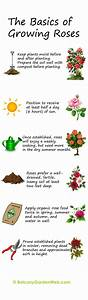 30 Diagrams to Make You Master in Growing Roses   Balcony ...