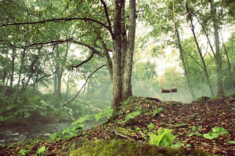 いい ね の 森