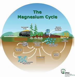 Magnesium for crop production: Secondary Macronutrients ...