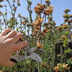 Geranien überwintern Schneiden : geranien pflanzen standort pflanzzeit begleitpflanzen plantura ~ Orissabook.com Haus und Dekorationen