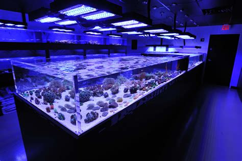 coral frag tanks  reef culture lit  panorama led