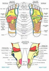 31 Printable Foot Reflexology Charts  U0026 Maps  U1405 Templatelab