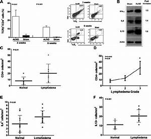 Lymph Node Dissection Results In Cd4  U03e9 Cell Inflammation