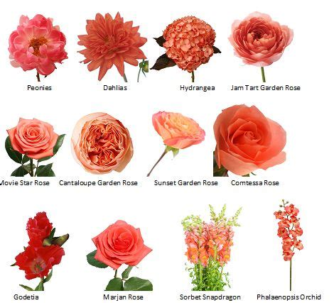 guide  coral flower choices   themed wedding