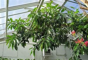 Assainir L Air De La Maison : purifier l 39 air de la maison gr ce aux plantes d polluantes ~ Zukunftsfamilie.com Idées de Décoration