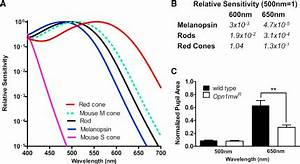 fig1:Distinct Contributions of Rod, Cone, and Melanopsin ...