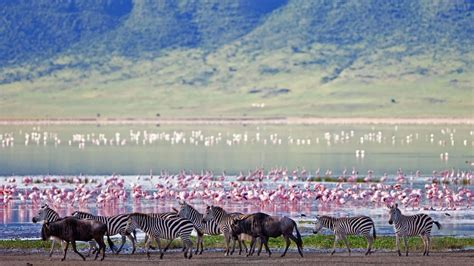 Andbeyond Ngorongoro Crater Lodge  Great Migration