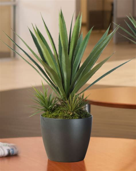 agave succulent plant tabletop perfection agave americana artificial succulent plant at officescapesdirect