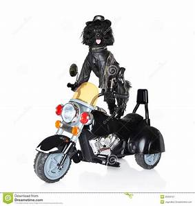 Dog Driving Motorcycle | www.imgkid.com - The Image Kid ...
