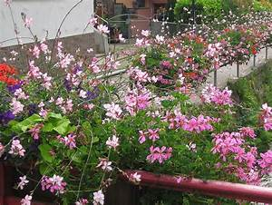 Pflanzen Für Innen : blumen und pflanzen f r innen au en g rtnerei huber in ~ Michelbontemps.com Haus und Dekorationen