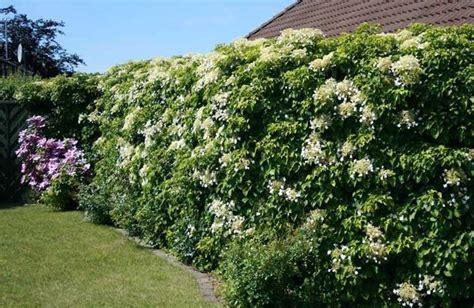 piante sempreverdi per terrazzi piante da terrazzo resistenti al vento