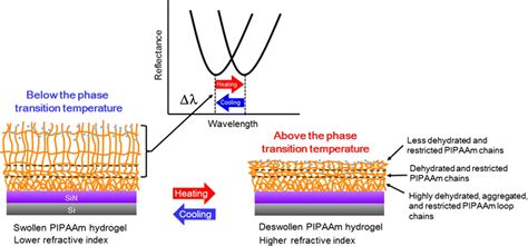 Measurement of the dynamic behavior of thin poly( N ...