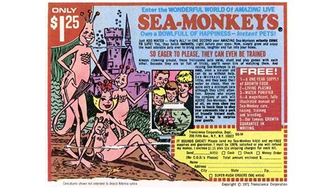 sea monkeys breath   feet south florida reporter