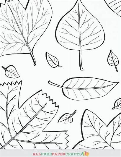 Coloring Fall Printable Leaves Pages Thanksgiving Cascading