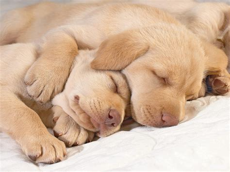 Puppies images Cute puppies in hug wallpaper photos (14748941)