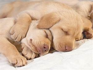 cute puppies hug wallpaper