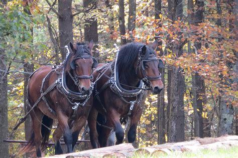 farm horses animals horse animal autumn domestic outdoor ranch riding livestock equestrianism rural stallion mammal farmland eventing trail pack pxhere