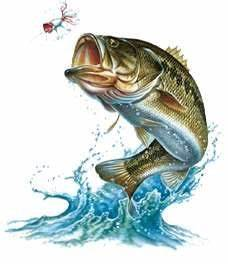 bluegill drawing   Sources: Been there, done that   just ...