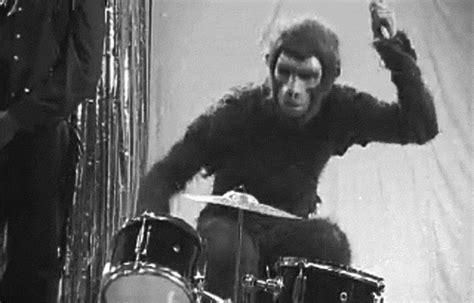 monkey gifs        evolution