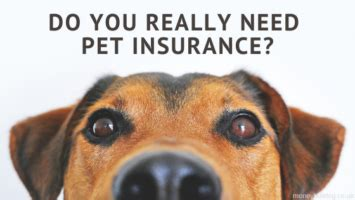 The top rated insurer in uk according to our users is the kennel club pet insurance with 76% of our reviewers rating their service as excellent. Do You Really Need Pet Insurance? | Money Bulldog