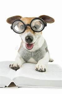 Avid reader happy dog stock photo image of domestic for Avid dog