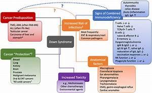 Of Immune System