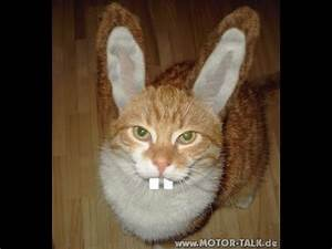 Funny Cat - Ostergrüße deutsch - YouTube  Funny