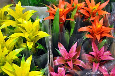New Covent Garden Flower Market   Flower market, Flower ...