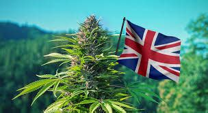 LondonWeed.Net – Top London & UK & Ireland & Scotland ...