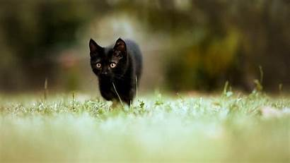 Cat Cool Backgrounds Wallpapers Cave