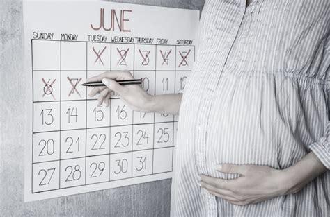 pregnancy calculator calendar week  week