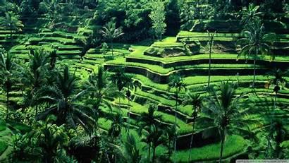 Indonesia Nature Bali Indonesian Rice Ubud Landscape