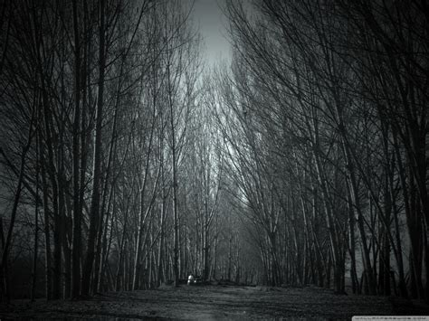 haunted forest  hd desktop wallpaper  dual monitor