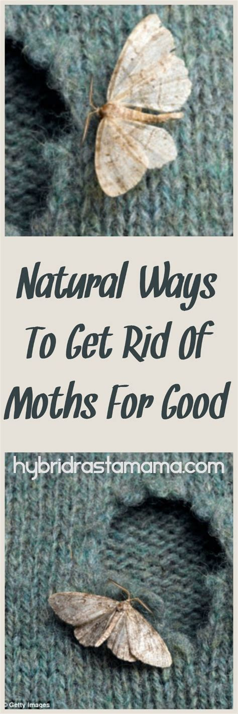How To Get Rid Of Moths In Closet Naturally by Ways To Get Rid Of Moths For By Hybrid Rasta