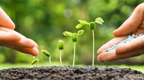 Gartenbeet Und Rasen Richtig Düngen