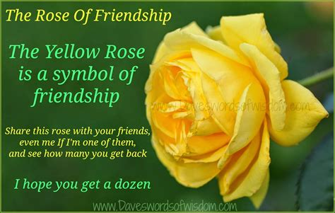 daveswordsofwisdomcom  yellow rose  friendship