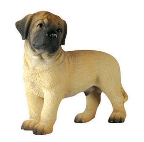 Do Bullmastiff Dogs Shed A Lot by Breeds Bull Mastiff Puppy
