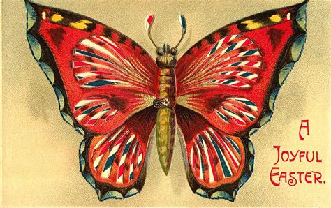 graffical muse  vintage butterfly illustrations