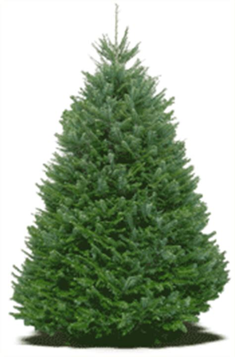 best care for real christmas tree how to care for a freshly cut tree