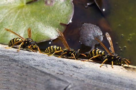 kleines wespennest bild  kleines wespennest great