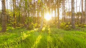 Walking, Through, The, Forest, At, Sunset, With, Sun, Rays, Breaking, Through, The, Trees, Stock, Video