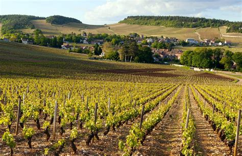 Photo Gallery Of Bourgogne